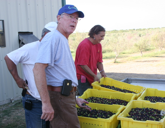 Meet a Farmer: Jim Henry, Texas Olives