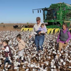 Meet a Cotton Farmer: Brandon Patschke