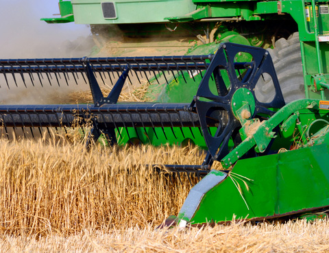 Texas wheat farmer