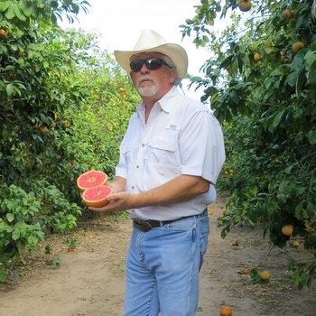 Texas citrus farmer Dale Murden
