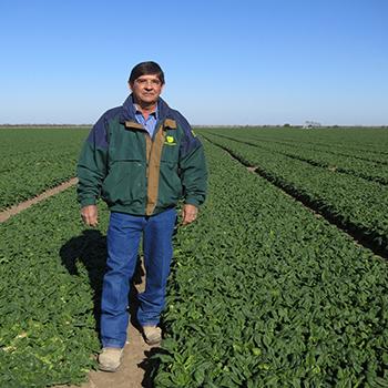 Meet a Farmer_Ed Ritchie_Spinach