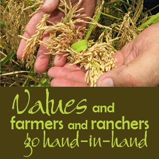 rancher hands_value story
