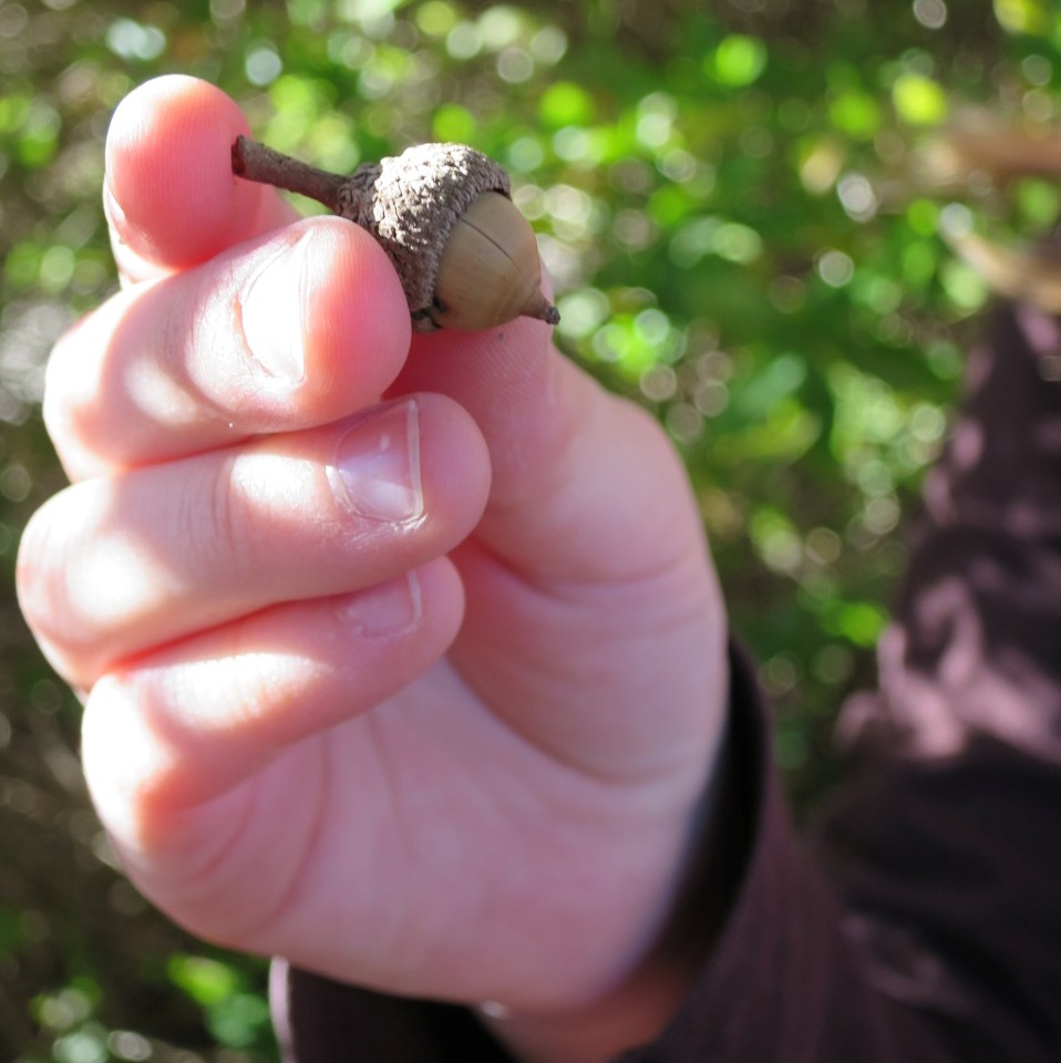 Emily holding acorn_Photo by Jessica Domel