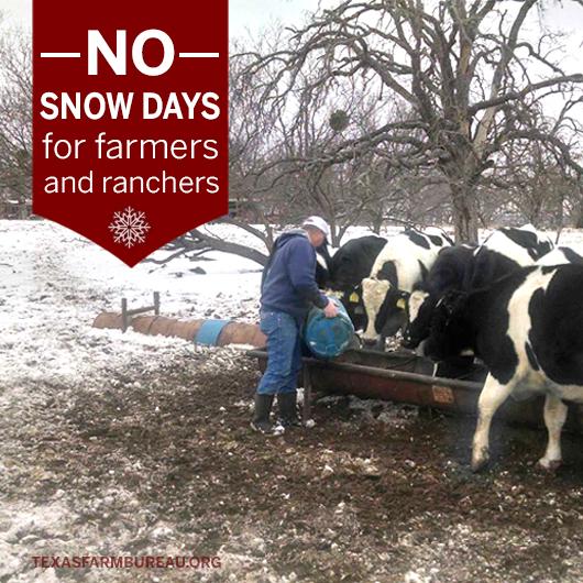 SnowDay3_Snowpocalypse
