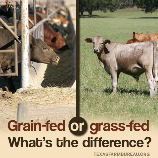 Grassfed_Grainfed_Beef