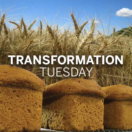 TransformationTuesday_Wheat