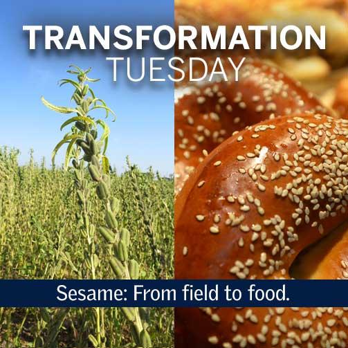 Sesame: Transformation Tuesday