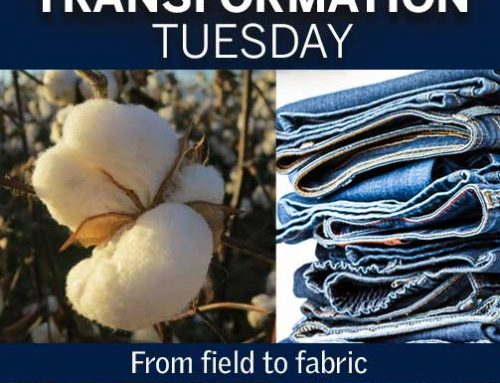 Transformation Tuesday: From field to fabric