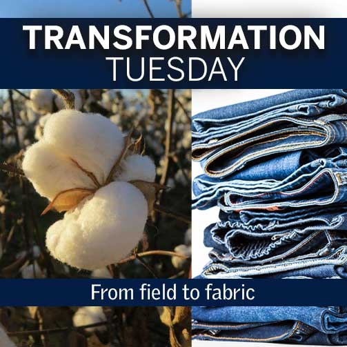 TransformationTuesday_Cotton