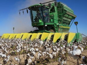 Cotton stripper in Midland, Texas (photo by Jessica Domel/TexasFarmBureau)