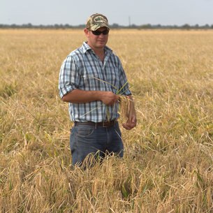 Timothy Gertson rice farmer