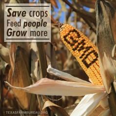 GMO fear isn't justified