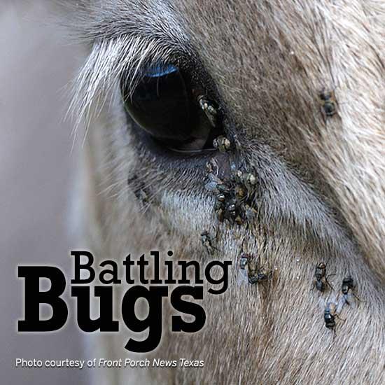 Battling bugs