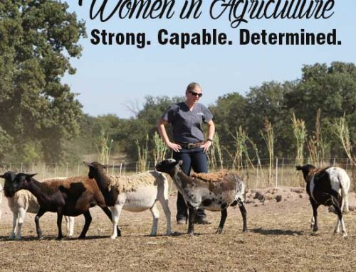 More female farmers, ranchers cropping up