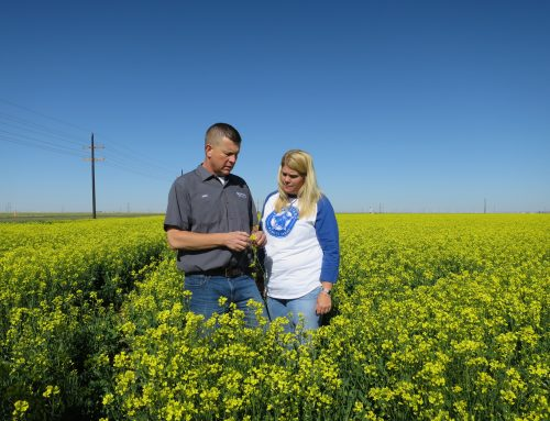 Meet a canola farmer: Justin Crownover
