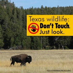 Don't mess with Texas wildlife