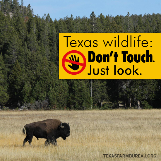 Don't touch Texas wildlife