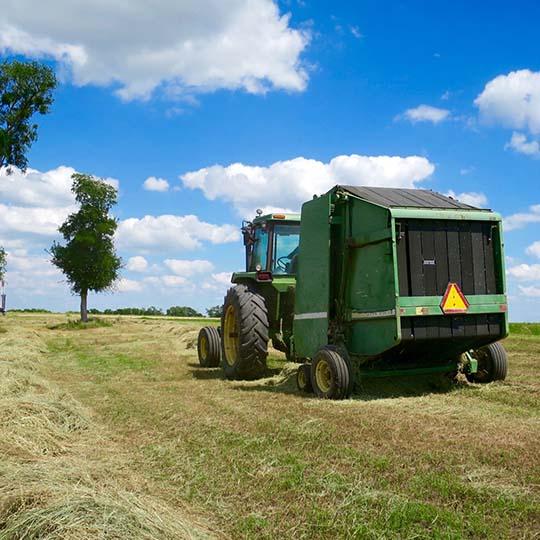 Texas summer hay