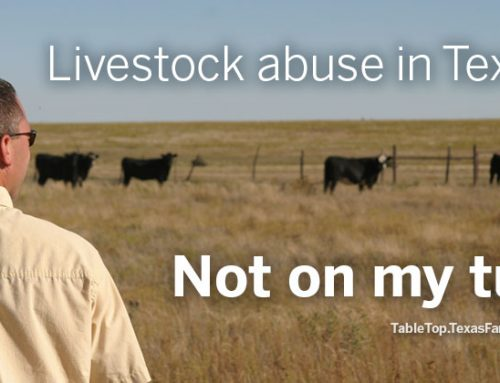 Animal abuse on Texas ranches and dairies?