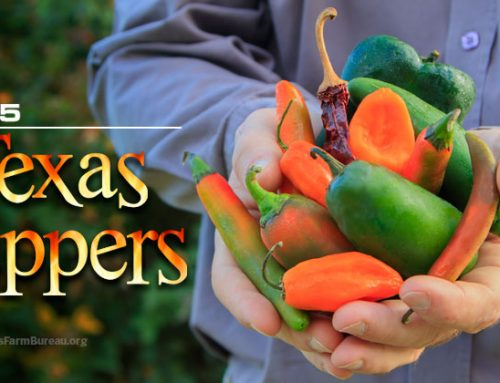 Top 5 Texas Peppers