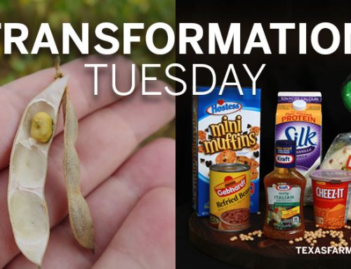 Transformation Tuesday: Soybeans