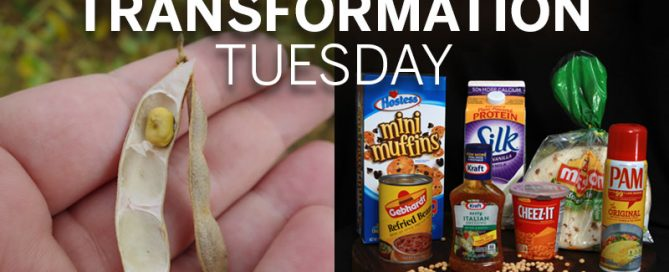 Transformation Tuesday_Soybeans