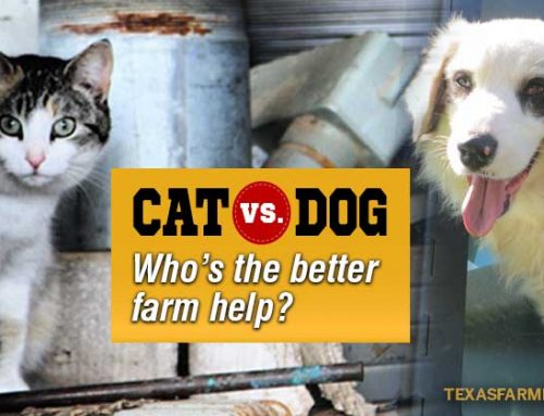 Top 5 reasons cats are better farm help
