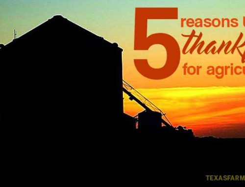 Top 5 reasons to be thankful for agriculture