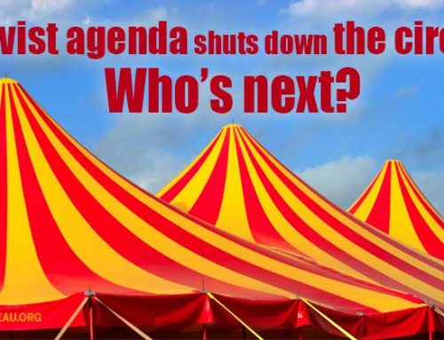 Animal rights activists shut down the circus