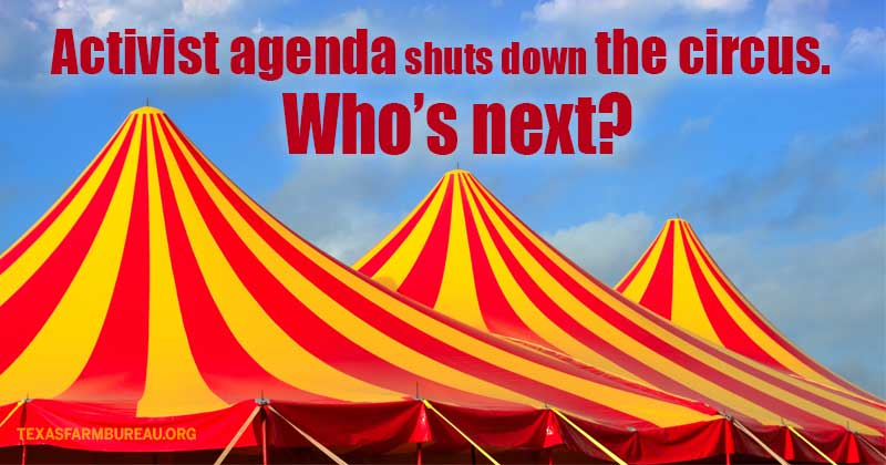 Animal rights activists shut down the circus. Who's next?