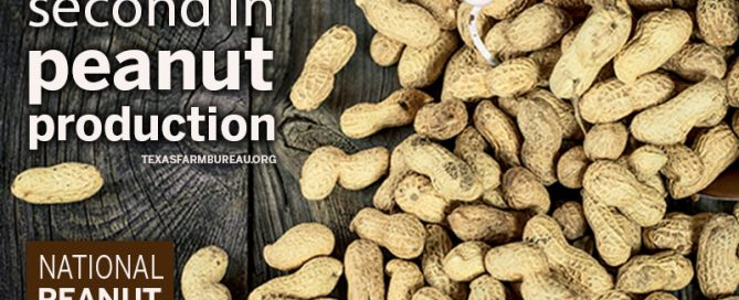 Texas is the second-largest peanut-producing state in the nation.