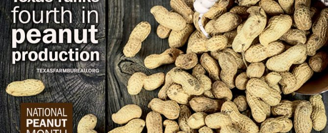 Texas peanut facts