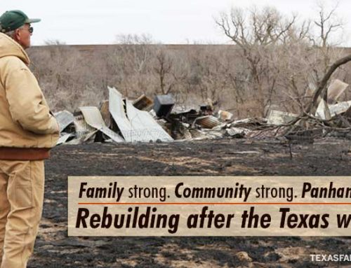 Rebuilding after the wildfires
