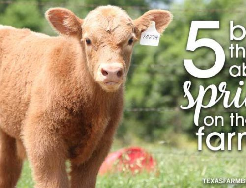 Top 5 favorite things about spring on the farm