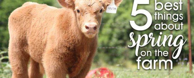 5 best things about spring on the farm