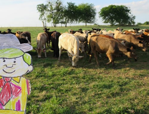 Flat Friends help students engage with Texas agriculture
