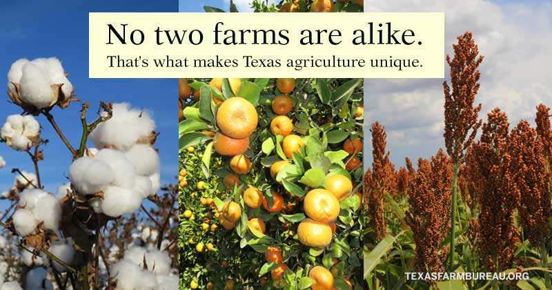 No two farmers are alike