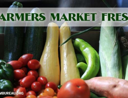 Oasis of fresh produce at farmers markets