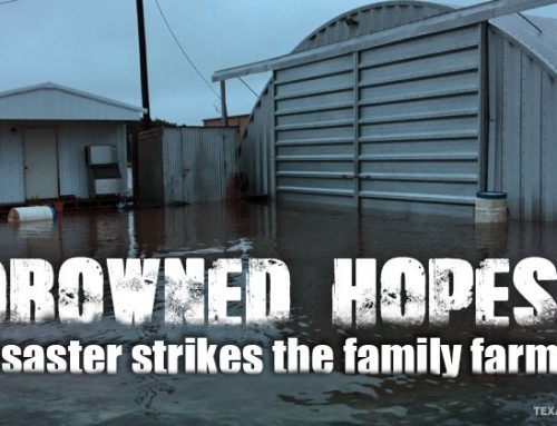 Harvey drowns hope as disaster strikes family farm