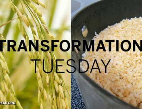 Transformation Tuesday: Rice