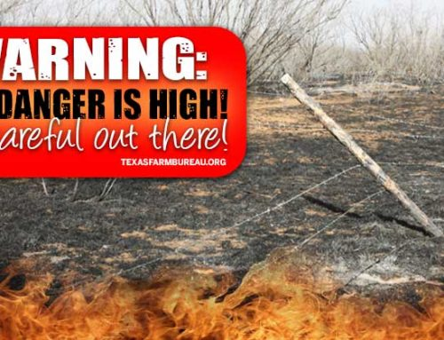 Fire danger high in Texas