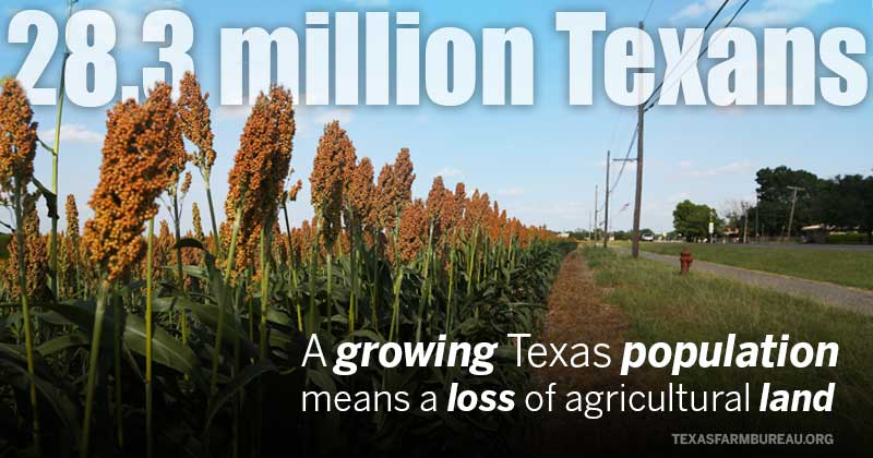 Texas population