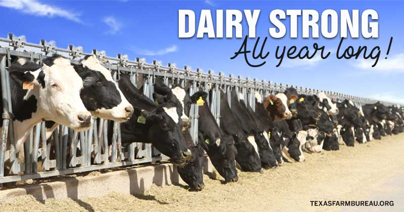 Dairy strong. All year long!
