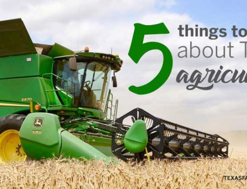 5 things you should know about Texas agriculture