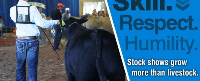 Stock shows