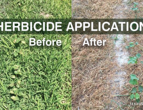Before and after weed killer