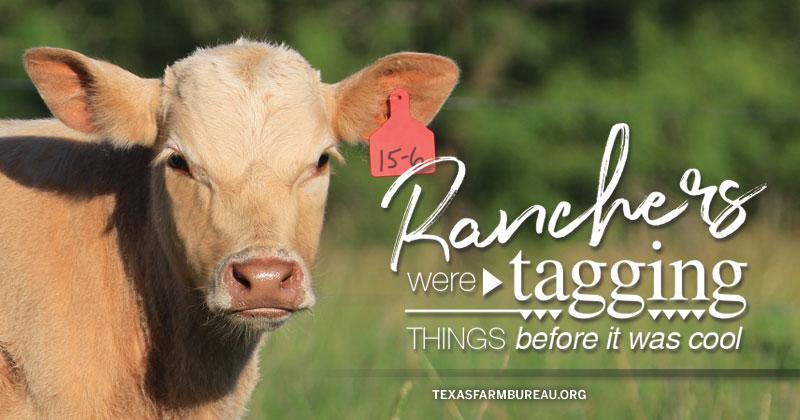 tagging livestock