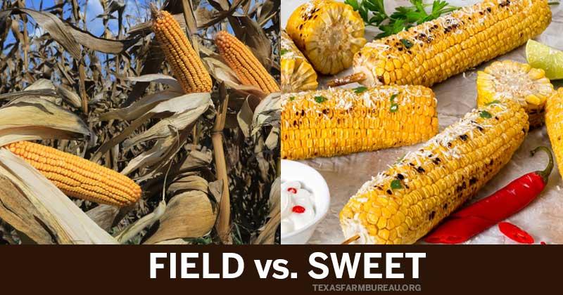 field corn_sweet corn