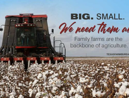Big isn't bad in agriculture