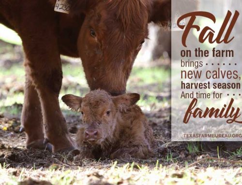 Fall on Texas farms, ranches
